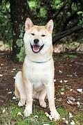 Happy Dog - Pixabay